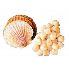 Морской гребешок 80-100шт/кг